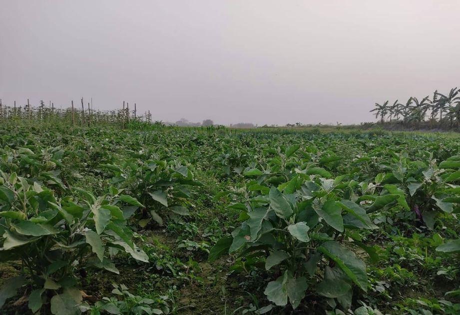 कृषि पेशाबाट आत्मनिर्भर बिन दम्पत्ति, वर्षको २५ लाखसम्म कमाउँछन्
